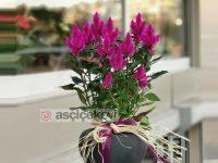 Canlı Çiçek Siparişi İçin As Çiçek Evi